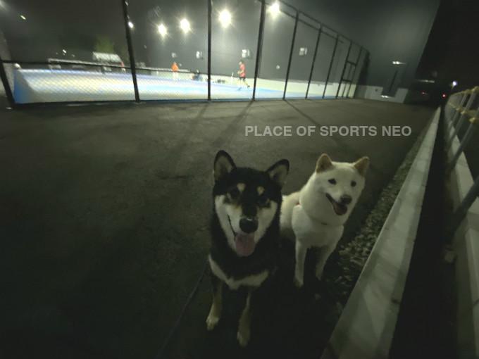 札幌市白石区米里テニスコートレンタル プレイスオブスポーツネオ 屋外砂入り人工芝コート ナイター 10月31日まで営業