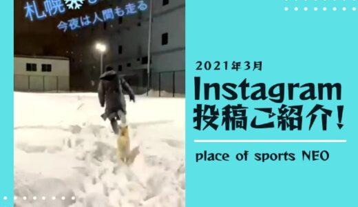【インスタグラム投稿紹介】NEO犬とNEOオーナーの雪遊び!