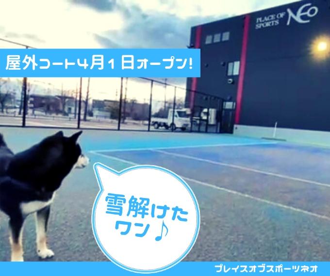 2021年4月1日 屋外テニスコートオープン 札幌レンタルテニスコート プレイスオブスポーツネオ